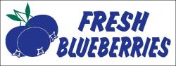 Blueberry Banner Digital