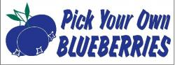 Blueberry Digital Banner (Item# P38BLUPYOHD)